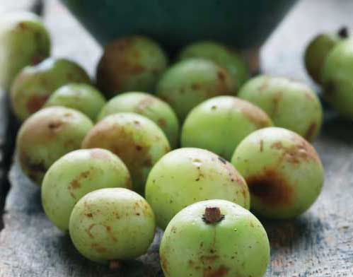 Amla An Amazing Superfruit! Health Article