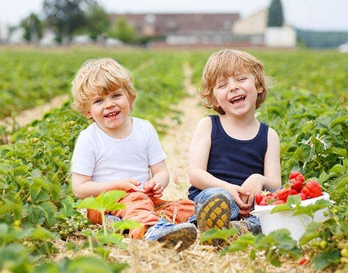 pesticides lung impact on kids