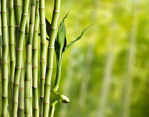 bamboo silica health benefits