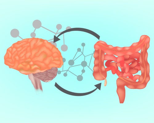 The gut-brain relationship