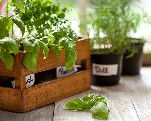 How To Make the Most of Your At-Home Herb Garden