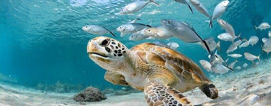 1 percent ocean fund