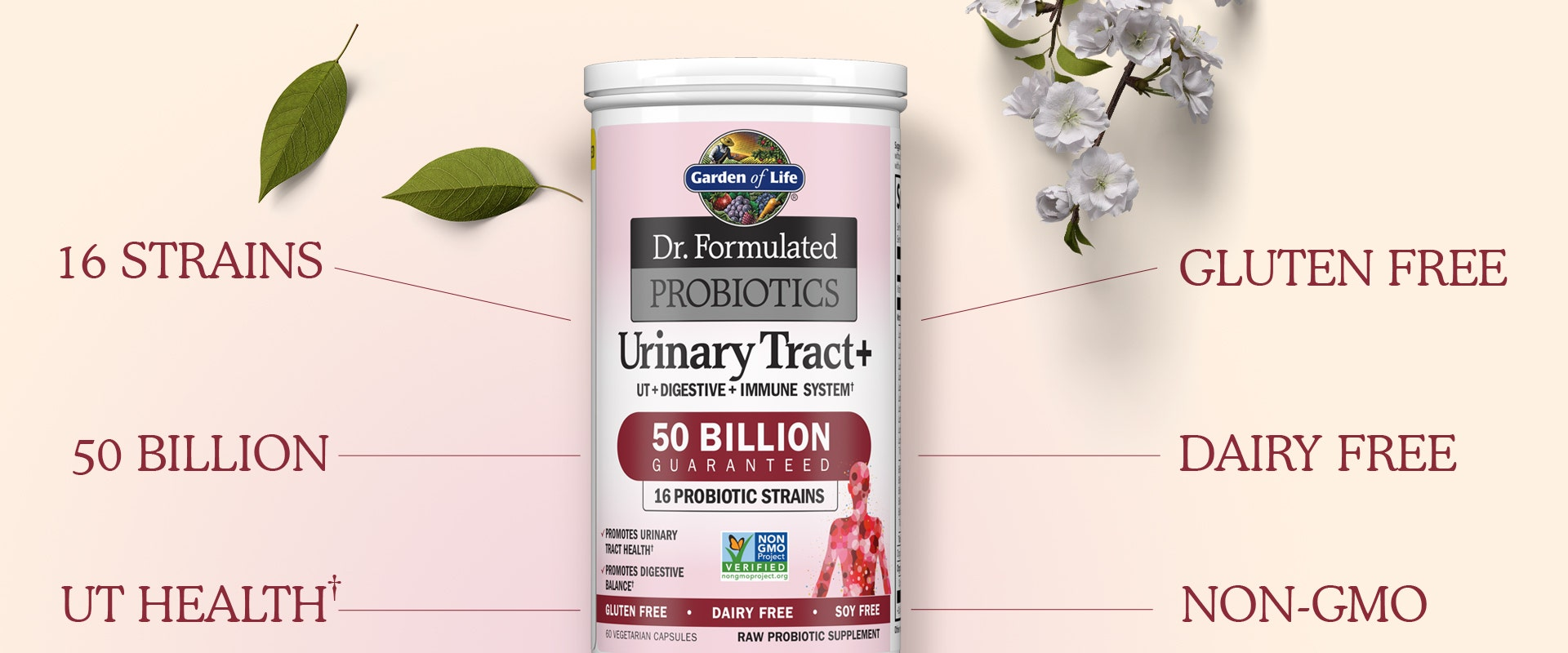 dr formulated probiotics urinary tract from garden of life